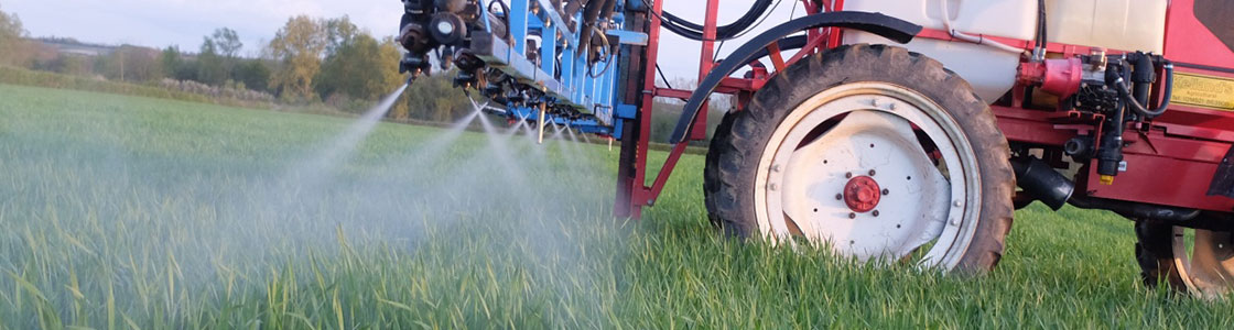 Spraying cereals crop